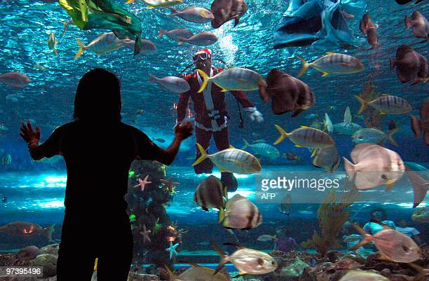 A visitor looks at a man dressed as Santa Claus diving inside an aquarium tank at a marine theme park in Manila on December 22 2009 as Filipino...