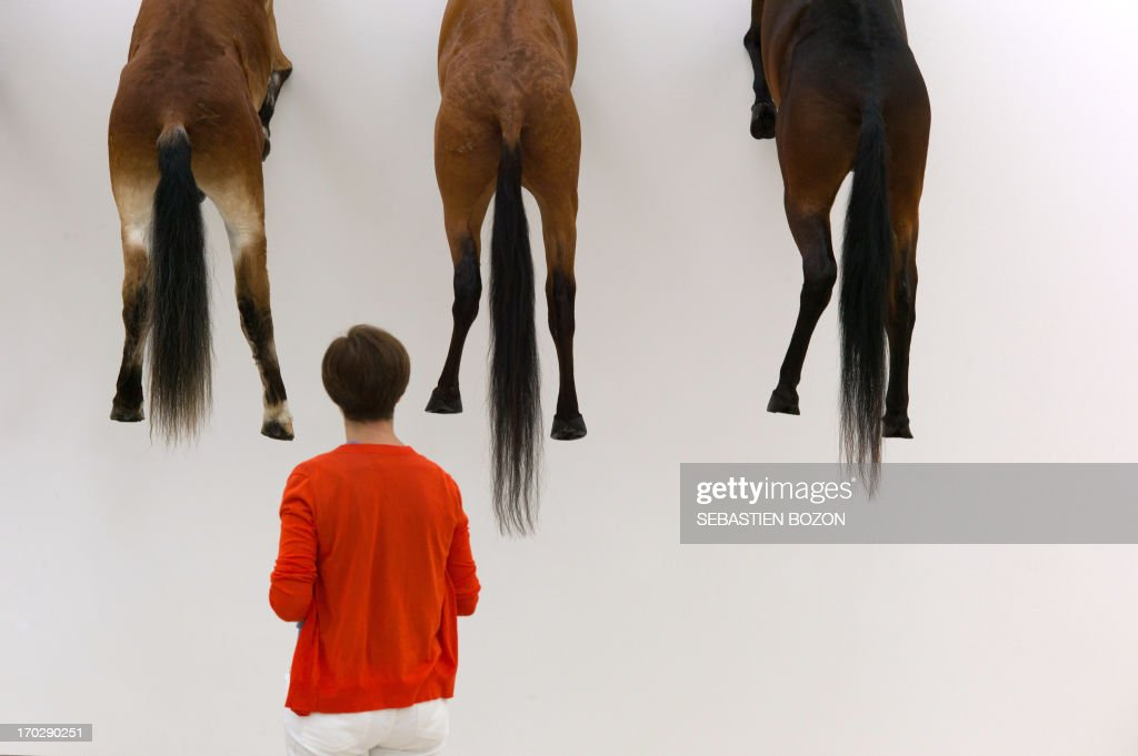 A visitor looks at an art project by Italian artist Maurizio Cattelan at the Beyeler Foundation in Basel on June 10, 2013. The famous modern art museum on the outskirts of Basel, created the event just days before the opening of the contemporary art fair Art Basel 2013 by exhibiting the work of Cattelan. The work shown in Basel is a composition containing the five versions created by Cattelan and presented for the first time in 2007.