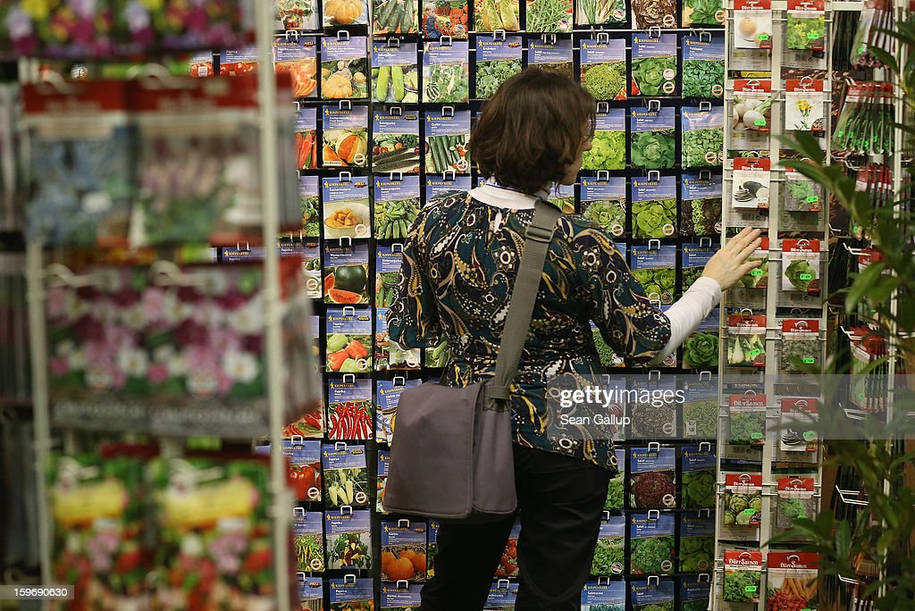 A visitor looks at bags of vegetable seeds at the 2013 Gruene Woche agricultural trade fair on January 18, 2013 in Berlin, Germany. The Gruene Woche, which is the world's largest agricultural trade fair, runs from January 18-27, and this year's partner country is Holland.