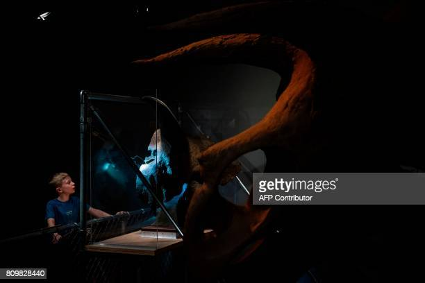 A visitor looks at dinosaur fossils at the Smithsonian's Natural History Museum on July 6 2017 in Washington DC / AFP PHOTO / Brendan Smialowski