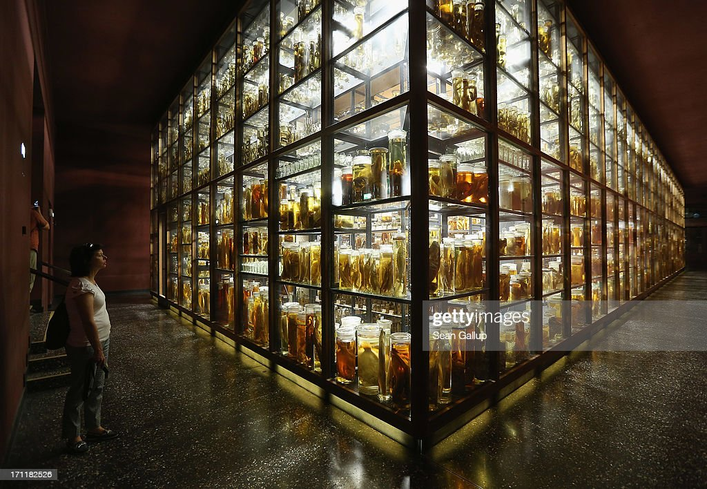A visitor looks at fish and other creatures preserved in alcohol in the East Wing of the Natural History Museum (Naturkundemuseum) on June 21, 2013 in Berlin, Germany. The East Wing houses a three-storey steel and glass structure in which 276,000 glass cylinders lining 12.6 kilometers of shelves contain over one million fish, reptiles, mammals, spiders, worms, crabs, insects and invertebrae, some of which date back to the 18th century. The original East Wing was destroyed by Allied bombing during World War II and the new wing was completed in 2010.