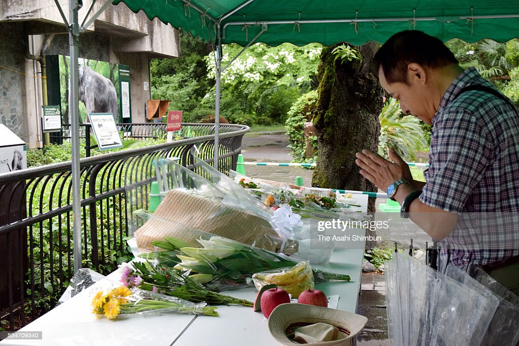 A visitor mourn the death of Japan's oldest elephant Hanako at Inokashira Park Zoo on May 27, 2016 in Musashino, Tokyo, Japan.