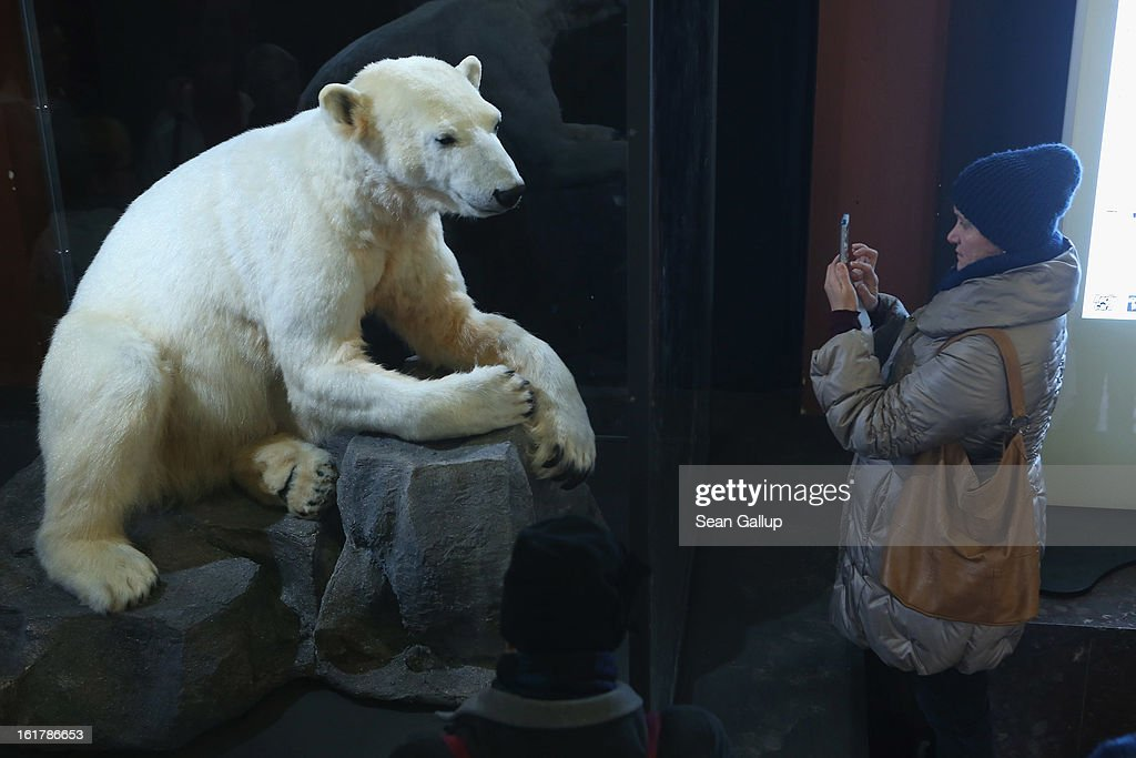 A visitor photographs a model of Knut the polar bear, that features Knut's original fur, on the first day it was displayed to the public at the Natural History Museum on February 16, 2013 in Berlin, Germany. Though Knut, the world-famous polar bear from the Berlin zoo abandoned by his mother and ultimately immortalized as a cartoon film character, stuffed toys, and more temporarily as a gummy bear, died two years ago, he will live on additionally as a partially-taxidermied specimen in the museum. Until March 15, the dermoplastic model of the bear will be on display before it joins the museum's archive, though visitors can see it once again as part of a permanent exhibition that begins in 2014.