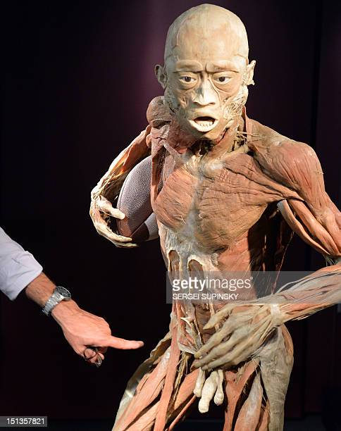 A visitor points out a piece of the popular scienceart exhibitions 'The Human Body' during it presentation for media in Kiev on September 6 2012 The...