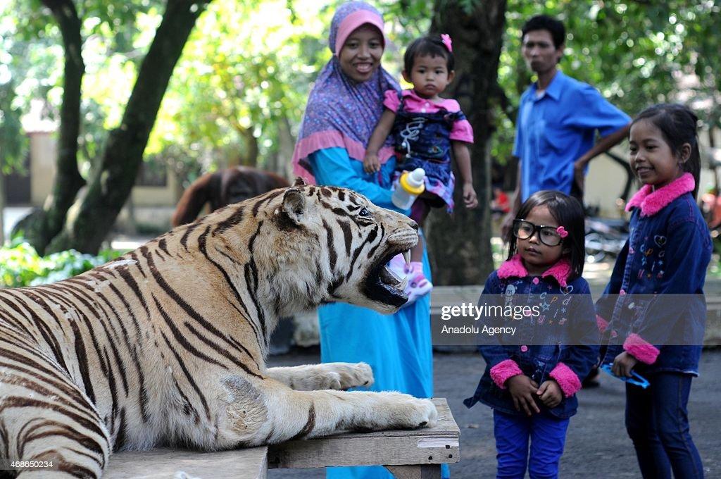 Visitor take photos with stuffed animals at Jurug Zoo in Surakarta Central Java Indonesia on April 05 2015 Jurug Zoo displays stuffed version of...