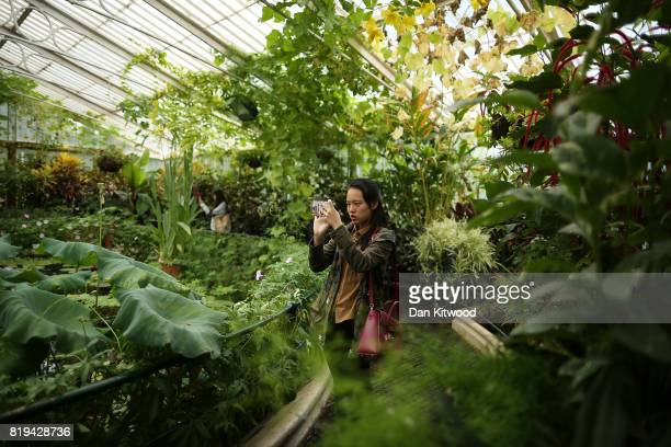 A visitor takes a photograph in the Waterlily House at Kew Gardens on July 20 2017 in London England