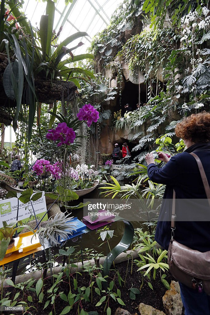 A visitor takes pictures, on February 21, 2013, at flowers of the 'Mille et une orchidees' (1,001 orchids) exhibition organized at the Jardin des Plantes in Paris from February 22 to March 23, 2013. All these orchids are part of the Jardin du Luxembourg collection.