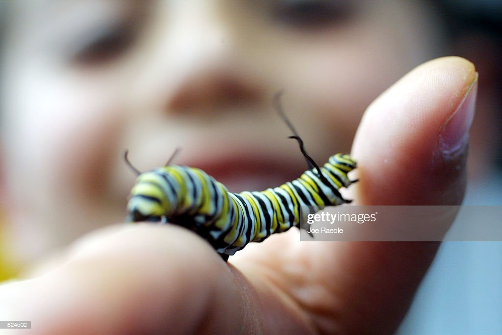 A visitor to the third annual 'Big Bug Out' at Miami Metrozoo holds a caterpillar May 5 2001 in Miami Florida The event was an opportunity to learn...
