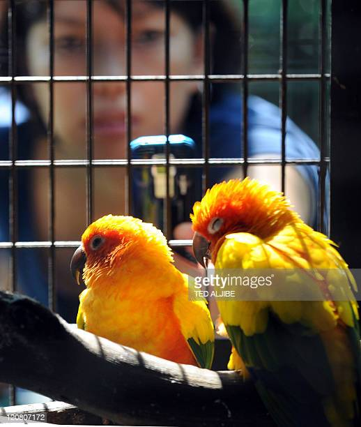 A visitor uses a mobile phone to take a photo of two Sun Conure birds sleeping inside a cage at the Wildlife Rescue Center in Manila on August 11...