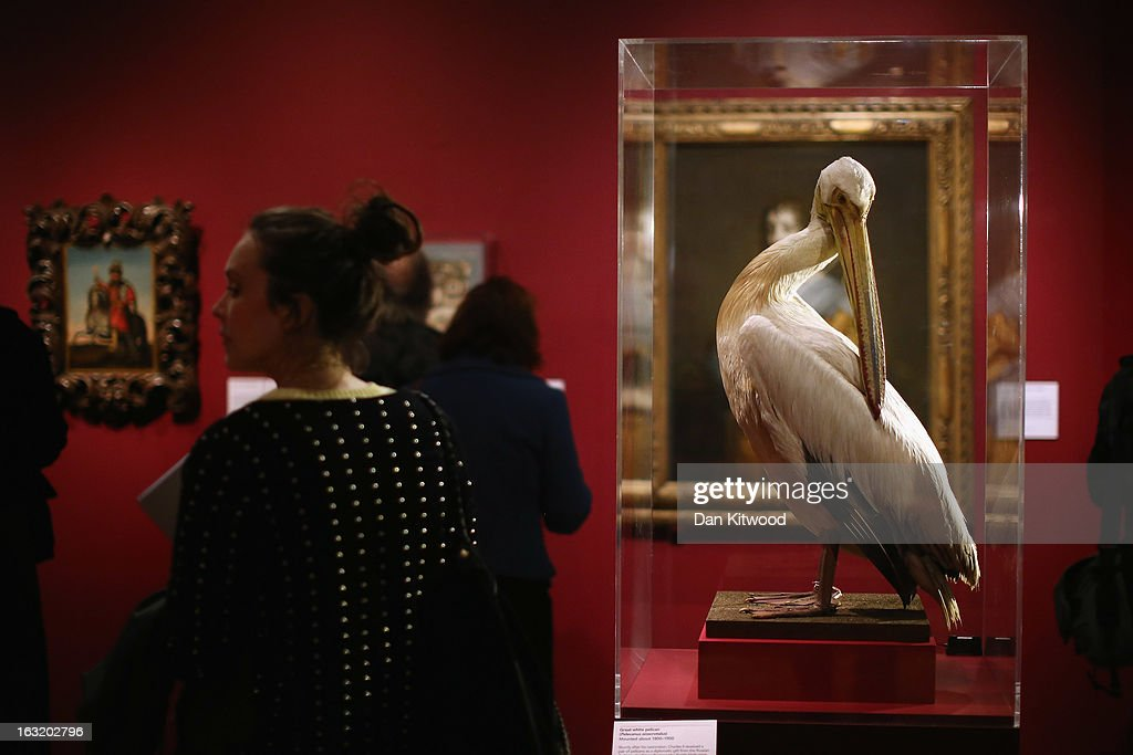 A visitor walks past a stuffed Pelican during a press preview of the V&A's new exhibit on March 6, 2013 in London, England. The exhibition, 'Treasures of the Royal Court: Tudors, Stuarts and the Russian Tsars' examines the development of cultural diplomacy and trade between Britain and Russia from it's origins in 1555. The runs at the V&A museum until July 14, 2013.
