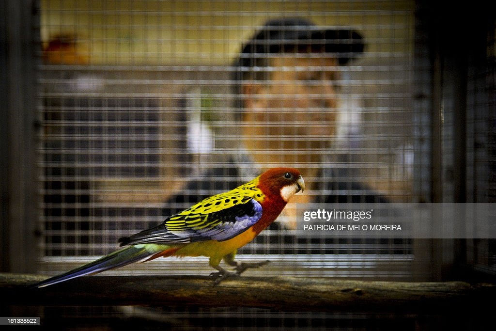 A visitor watches a parrot in his cage at the pet festival in Lisbon on February 9, 2013.