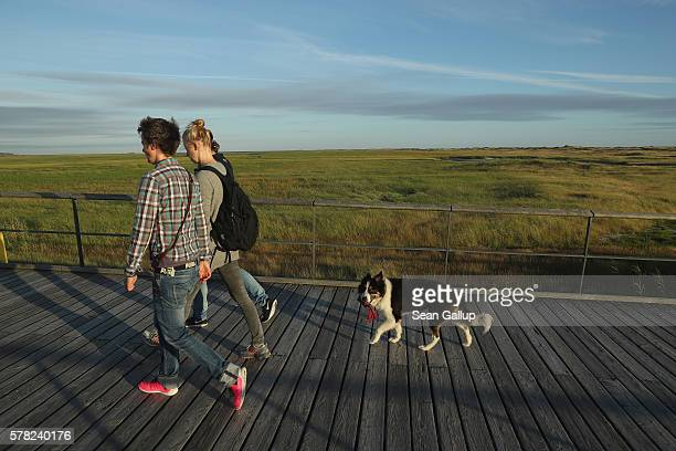 Visitors and a dog walk on a wooden walkway that crosses protected dunes and salt marshes after a day at the beach on July 18 2016 at...