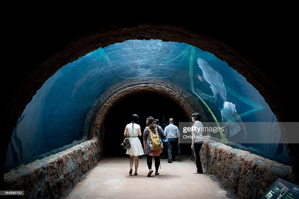 Visitors and media walk through an underwater tunnel in the Amazon Flooded Forest exhibit during a media tour ahead of the opening of River Safari at...