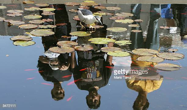 Visitors are reflected in a pool as they view a blue heron searching for fish during a press preview for Brooklyn Botanic Garden's Annual Sakura...