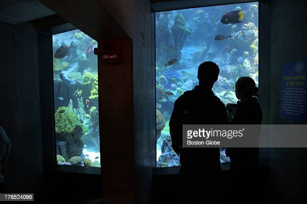 Visitors are silhouetted as fish swim by in the newly renovated Giant Ocean Tank at the New England Aquarium