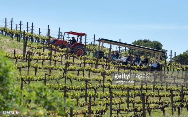 Visitors at Benziger Family Winery enjoy a tram tour through the vineyard on April 23 in Glen Ellen California After record winter rainfall battered...