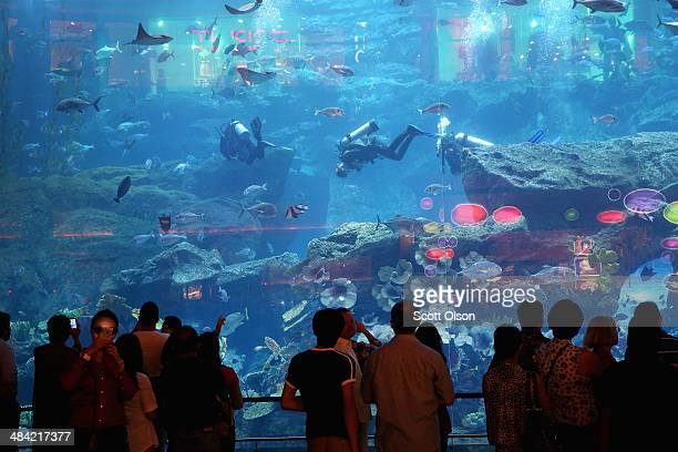 Visitors check out the Underwater Zoo at the Dubai Mall on April 9 2014 in Dubai United Arab Emirates The Dubai Mall attracts more annual visitors...