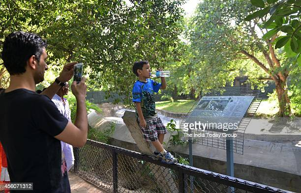 Visitors clicking picture of his Child stand on fencing in enclosure of White Tiger at Delhi zoo