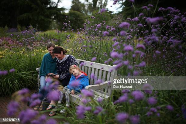 Visitors enjoy a break from the rain at Kew Gardens on July 20 2017 in London England