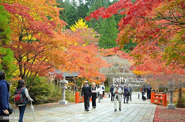 Visitors enjoy autumn colours at Mount Koya on October 31 2014 in Koya Wakayama Japan