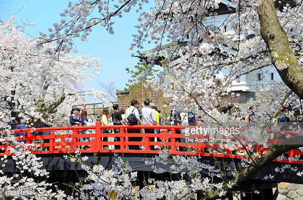 Visitors enjoy cheery blossom in full bloom at Hirosaki Castle as the Cherry Blossom Festival begins on April 22 2015 in Hirosaki Aomori Japan