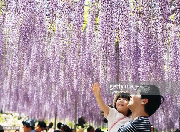 Visitors enjoy wisteria flowers at Ashikaga Flower Park in Ashikaga Tochigi Prefecture north of Tokyo on May 5 2017 ==Kyodo