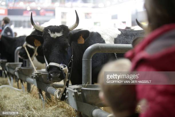 Visitors look at a cow on the opening day of the International Agriculture Fair at the Porte de Versailles exhibition center in Paris on February 25...