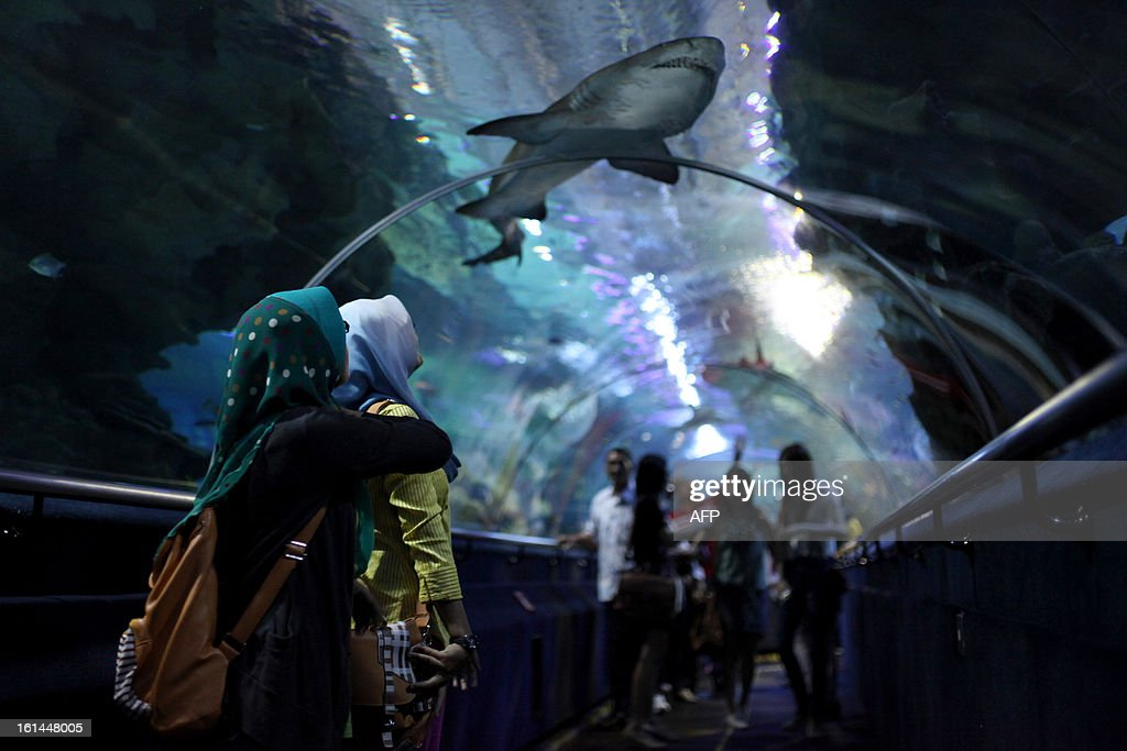 Visitors look at a shark swimming in a tank at Aquaria KLCC in Kuala Lumpur on February 11, 2013. The state-of-the-art oceanarium at Aquaria KLCC showcases over 5,000 exhibits of aquatic and land-bound creatures over a sprawling 60,000 square-foot space located in the Concourse Level of the Kuala Lumpur Convention Centre.