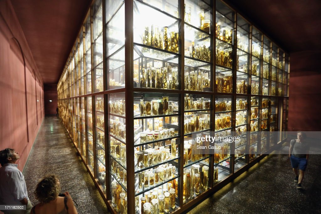 Visitors look at creatures preserved in alcohol in the East Wing of the Natural History Museum (Naturkundemuseum) on June 21, 2013 in Berlin, Germany. The East Wing houses a three-storey steel and glass structure in which 276,000 glass cylinders lining 12.6 kilometers of shelves contain over one million fish, reptiles, mammals, spiders, worms, crabs, insects and invertebrae, some of which date back to the 18th century. The original East Wing was destroyed by Allied bombing during World War II and the new wing was completed in 2010.