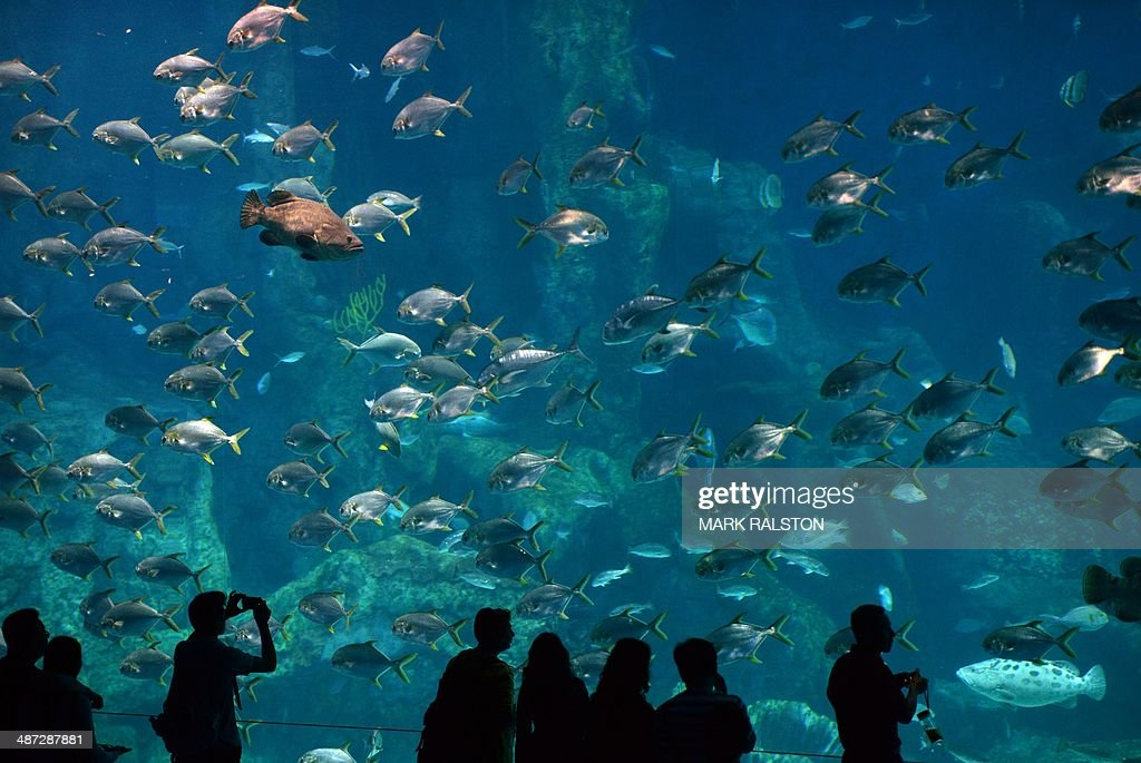 Visitors look at fish at the aquarium inside the Chimelong Ocean Kingdom in Zhuhai on April 29, 2014. The park which claims to be the world's largest ocean theme park was built at an estimated cost of USD3.3 billion and opened in March of this year. AFP PHOTO/Mark RALSTON