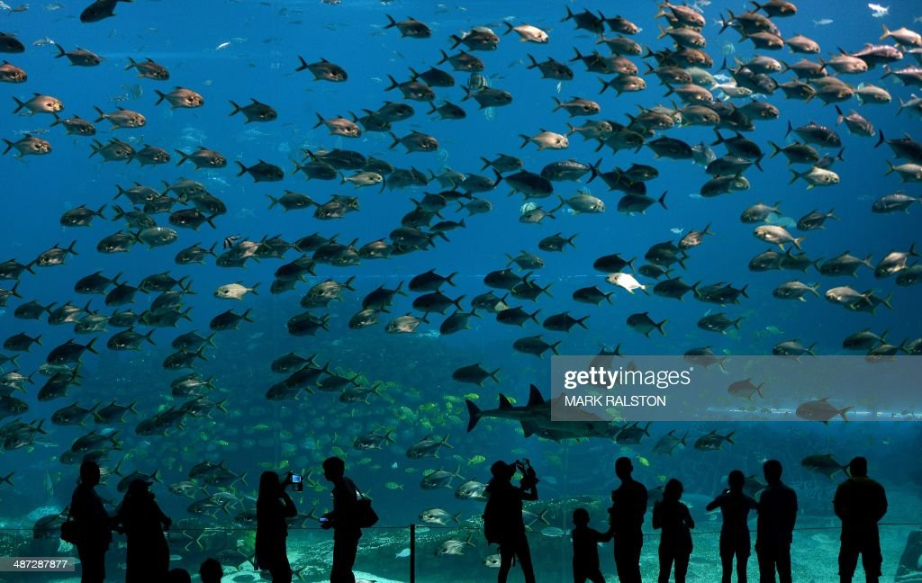 Visitors look at fish in the aquarium inside the Chimelong Ocean Kingdom in Zhuhai on April 29, 2014. The park which claims to be the world's largest ocean theme park was built at an estimated cost of USD3.3 billion and opened in March of this year. AFP PHOTO/Mark RALSTON