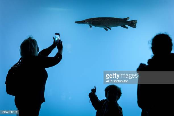 Visitors look at fish next to an aquarium on the opening day of Aquatis the largest fresh water aquariumvivarium in Europe on October 21 2017 in...