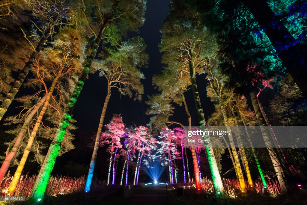 Westonbirt Arboretum Transforms into an Enchanted Christmas