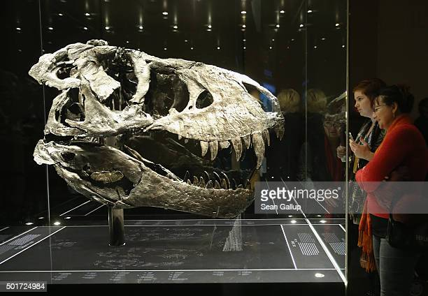 Visitors look at the original skull which due to its weight had to be exhibited separately from the skeleton of Tristan the Tyrannosaurus Rex on the...
