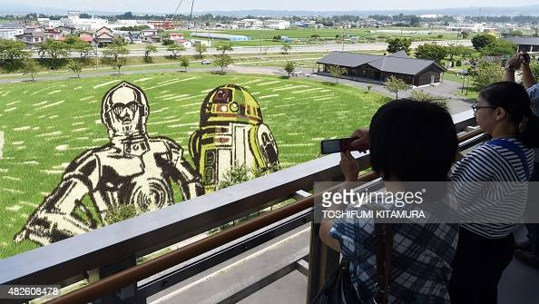 Visitors look at the Star Wars rice paddy with film characters C3PO and R2D2 in Inakadate village in Aomori prefecture on August 1 2015 The Star Wars...