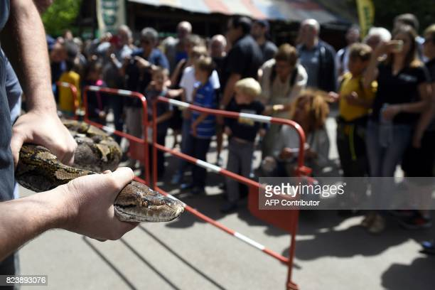 Visitors look at workers of the Amneville's zoo posing with a reticulated female phyton of 7 meters long and weighing 80 kg upon its arrival on July...