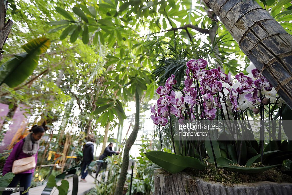 Visitors look, on February 21, 2013, at flowers of the 'Mille et une orchidees' (1,001 orchids) exhibition organized at the Jardin des Plantes in Paris from February 22 to March 23, 2013. All these orchids are part of the Jardin du Luxembourg collection.