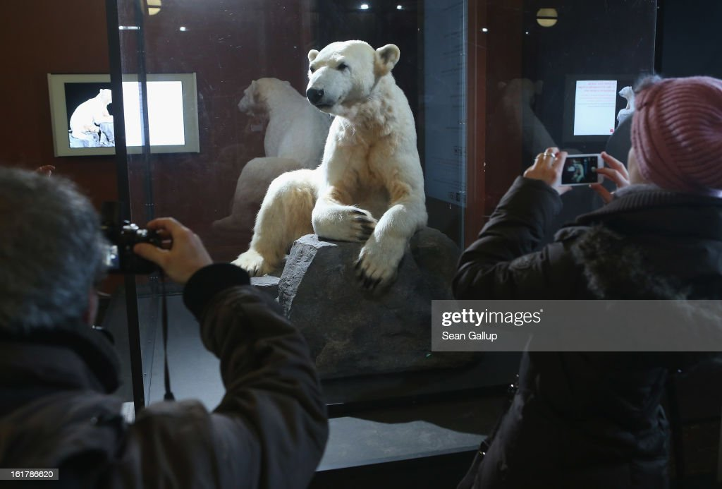 Visitors photograph a model of Knut the polar bear on the first day it was displayed to the public at the Natural History Museum on February 16, 2013 in Berlin, Germany. Though Knut, the world-famous polar bear from the Berlin zoo abandoned by his mother and ultimately immortalized as a cartoon film character, stuffed toys, and more temporarily as a gummy bear, died two years ago, he will live on additionally as a partially-taxidermied specimen in the museum. Until March 15, the dermoplastic model of the bear will be on display before it joins the museum's archive, though visitors can see it once again as part of a permanent exhibition that begins in 2014.