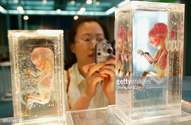 A visitors photographs a preserved fullbody plastinate of an embryo at the 'Mysteries of the Human Body' exhibition on June 24 2005 in Seoul South...