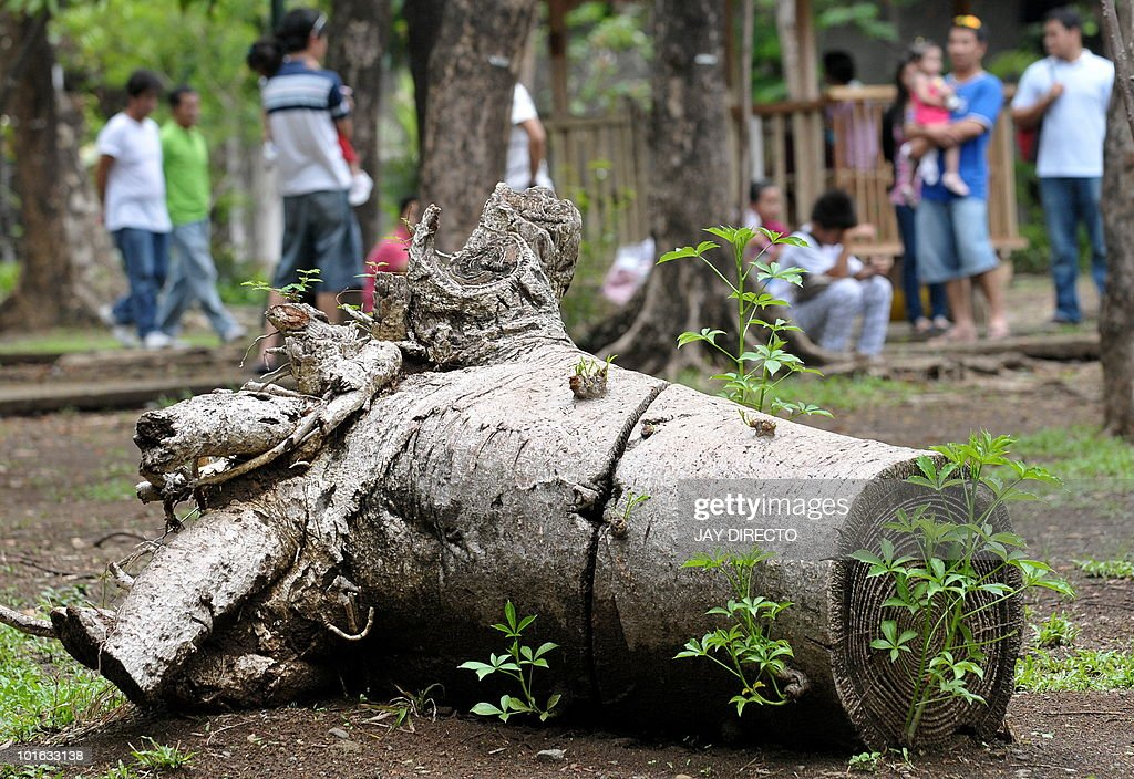 Visitors picnic near to a dead tree at the Ninoy Aquino Park during World Environment Day in Quezon City, suburban Manila on June 5, 2010. The World Environment Day, commemorated each year on June 5, is one of the principal vehicles through which the United Nations stimulates worldwide awareness of the environment and enhances political attention and action.