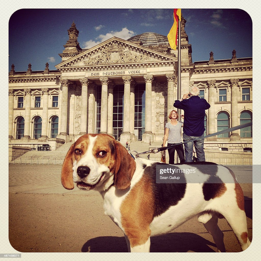 Visitors snap photos of each other as a dog strains on its leash outside the Reichstag on April 28, 2014 in Berlin, Germany. The Reichstag, home of the Bundestag, the German parliament, is among the city's major landmarks and a favourite tourist destination.