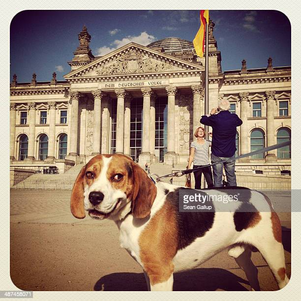 Visitors snap photos of each other as a dog strains on its leash outside the Reichstag on April 28 2014 in Berlin Germany The Reichstag home of the...