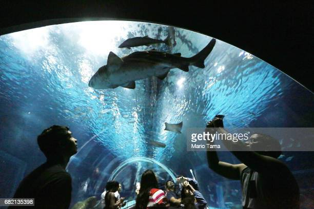 Visitors stand in an underwater glass tunnel in AquaRio the city's new aquarium which opened in November as a shark and other marine life swim past...
