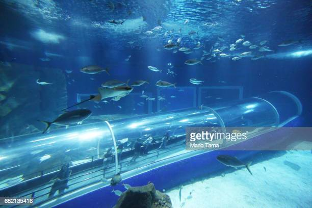 Visitors stand in an underwater glass tunnel in AquaRio the city's new aquarium which opened in November as marine life swim past on May 11 2017 in...