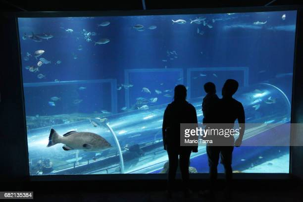 Visitors stand in AquaRio the city's new aquarium which opened in November on May 11 2017 in Rio de Janeiro Brazil The aquarium is touted as the...