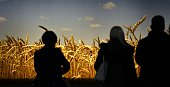 Visitors stand in front of a wheat illumination during the opening day of the 'Gruene Woche' agricultural fair on January 16 2015 in Berlin The...