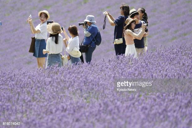 Visitors stroll through fields of lavender flowers blooming at Farm Tomita in Nakafurano on the northernmost Japanese main island of Hokkaido on July...