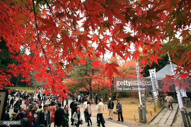 Visitors stroll under coloured leaves at Chusonji Temple on November 5 2011 in Hiraizumi Iwate Japan