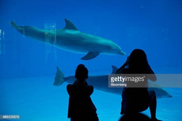 Visitors take photographs of dolphins as they swim by at the National Aquarium in Baltimore Maryland US on Wednesday Aug 26 2015 Home flippers turned...