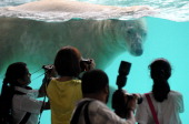 Visitors take photographs of 'Inuka' a male polar bear as he swims in its pool enclosure at the Singapore Zoo on May 29 2013 The 22yearold polar bear...